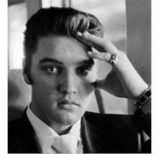 Elviscontemplative