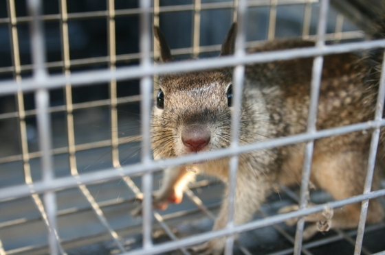 squirrel in a cage
